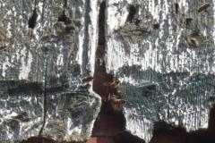 Ein wildes Bienenvolk hat die Holzfassade einer Scheune als Unterkunft gewählt