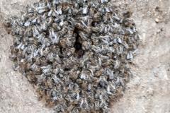 Lüftungsschlitz an einem Flugloch eines Bienenkorbes
