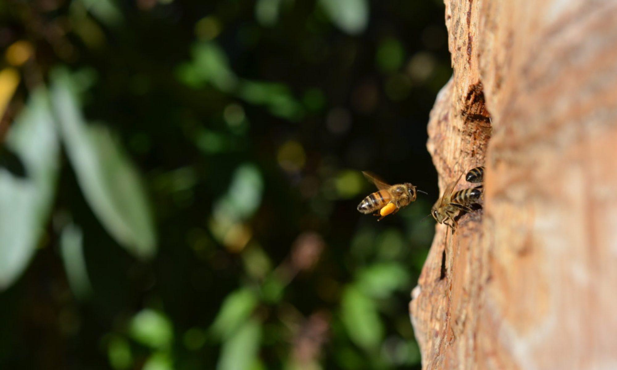 wilde-honigbienen.de